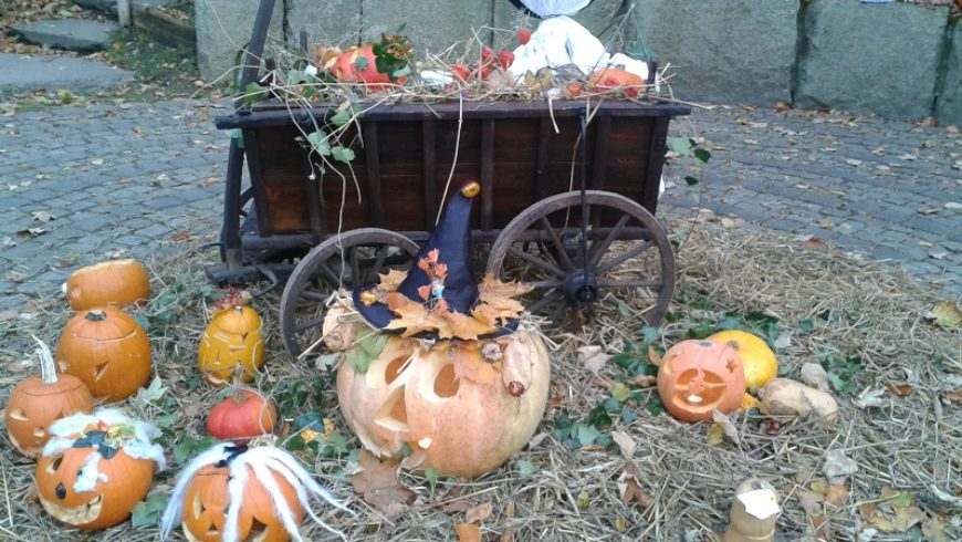 Halloween im Zoo Stralsund
