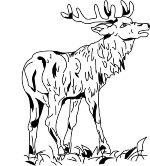 Hirsch-gross_Logo-e1540633473303.jpg