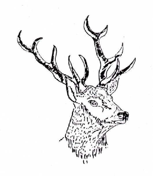 Logo-Hirschkopf.jpg