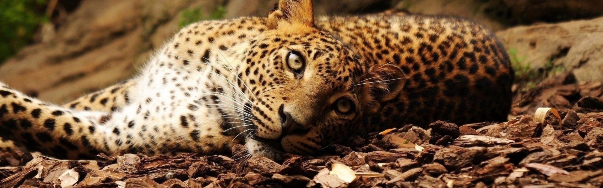 jaguar-62726_1920x600.jpg