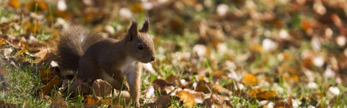 squirrel-autumn_1920x600.jpg