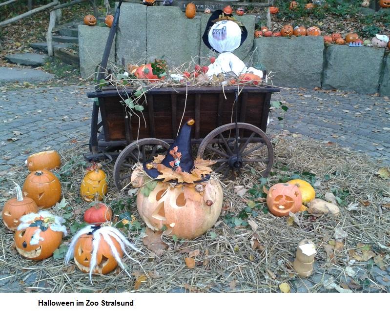 Halloween-im-Zoo.jpg