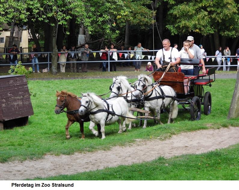 Pferdetag-im-Zoo.jpg