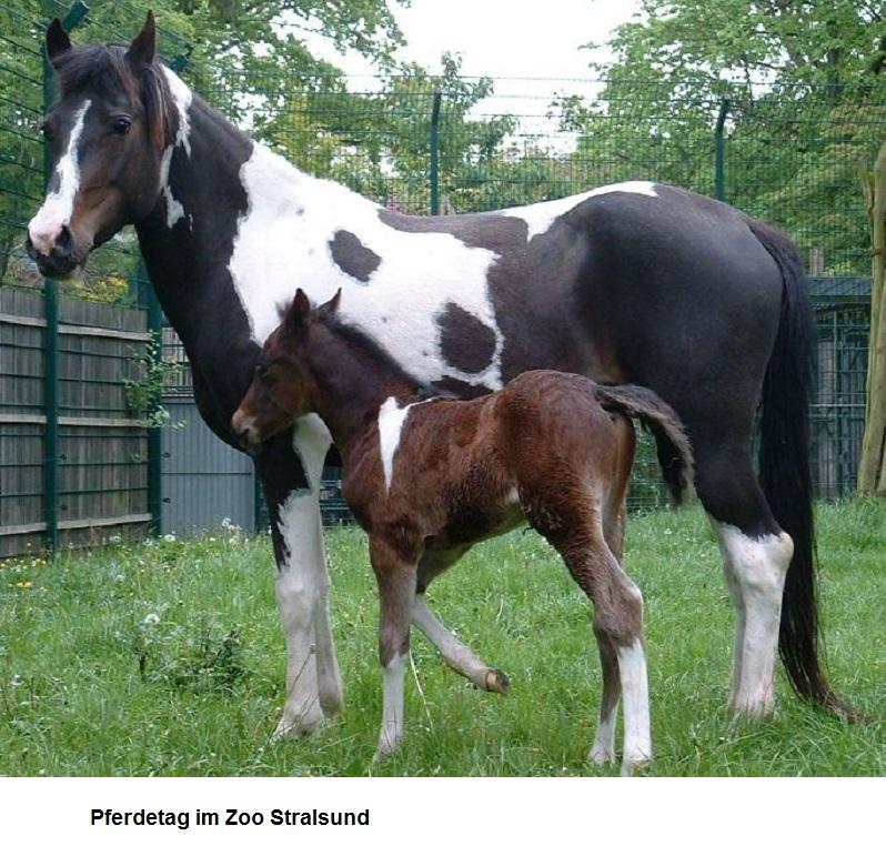 Pferdetag.jpg