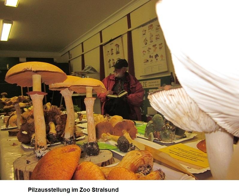 Pilzausstellung-im-Zoo-Stralsund.jpg