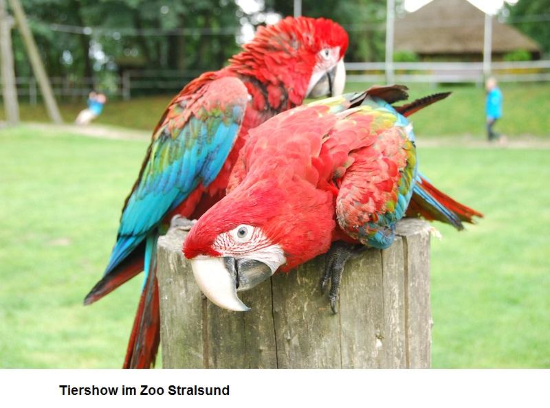 Tiershow-im-Zoo-Stralsund.jpg