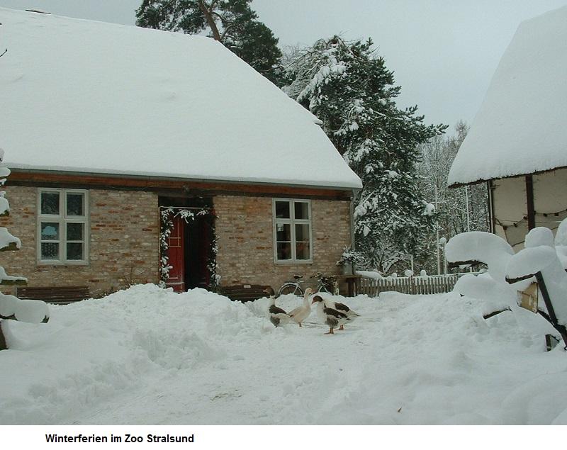 Winterferien-im-Zoo-Stralsund.jpg