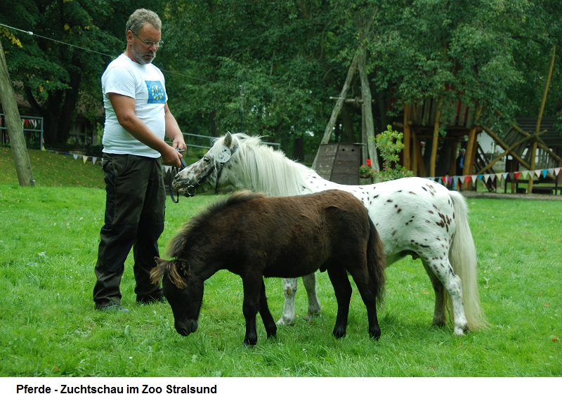 Zuchtschau-Pferde.jpg