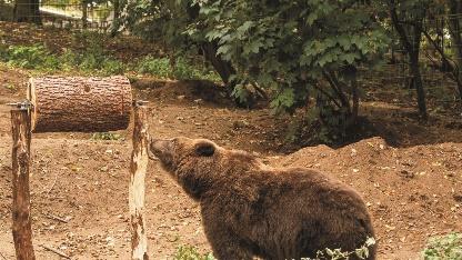 Bärentrommel